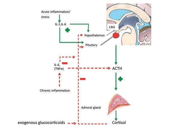 Can inhaled steroids cause adrenal insufficiency biogen steroids legit
